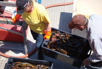 一番身入りが良くおいしい春漁のオマールをご案内中です。