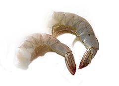 マハラジャ 高塩分海水養殖 活〆バナメイ海老(殻付き)